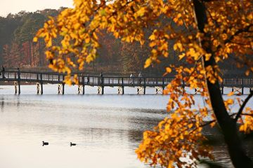 Newport News Park- Lee Hall Bridge in the Fall