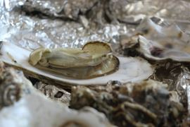 oyster-1374597_1280_SC